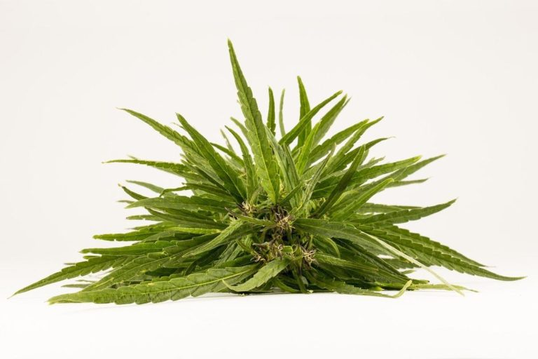 Jak można wygodnie pozyskać nasiona marihuany?